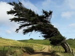 arbre penché