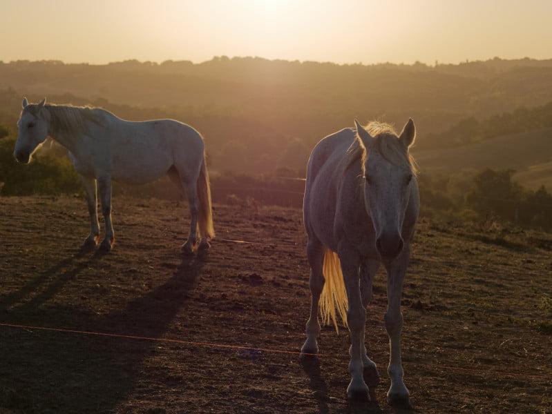chevaux_mauroux