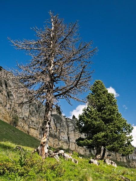 arbres_chartreurse